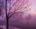 North Holland sunrise mist 2013