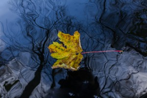 leaf-on-water